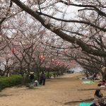 山口県戦場ヶ原公園の桜の様子は?下関市立歴史博物館に駐車場はある?