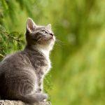 ツイッターで話題!68才のお父さんが考えた猫の名前リストが面白すぎる!どん兵衛?