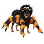 【ハロウィン】ペット用衣装おすすめ5選!犬用や猫用がかわいい♪