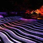 【ももち浜ストア】福岡景観賞巡り!ナガタパンや博多ライトアップウォークの場所は?